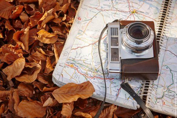 So funktioniert eine Wildkamera und was Sie beim Kauf beachten sollten